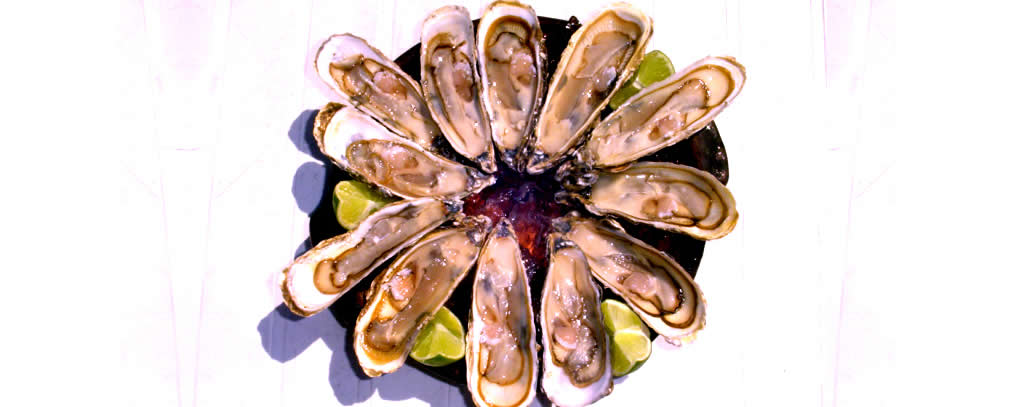 Frutos do mar da melhor qualidade e sabor...